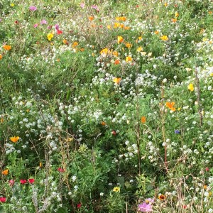 Wild flowers opening in October - who would take responsibility for that?