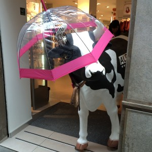 Cow with umbrella in high street shop. That's different to our normal expectations